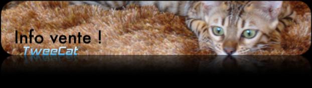 Info vente pour votre futur chaton - Photo d`Elite une de nos femelle bengal !