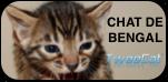 TweeCat.com - Elevage de chat de bengal