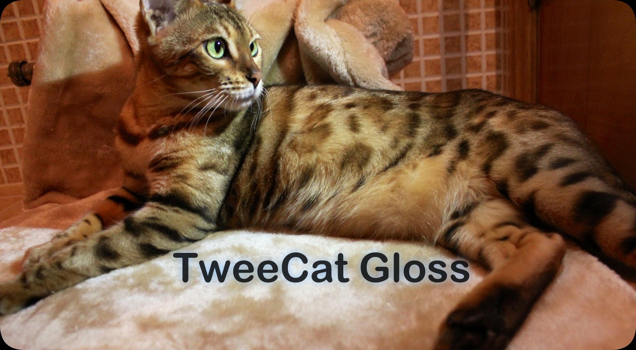 TweeCat Gloss